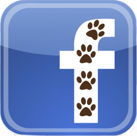 Visit NAFA on Facebook!